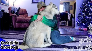 Hugging My Dog For Too Long