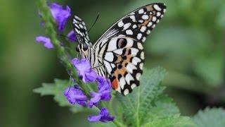 Притча. Урок бабочки
