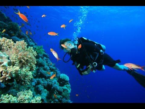 Sejur Scuba Diving - Pacific, Micronesia