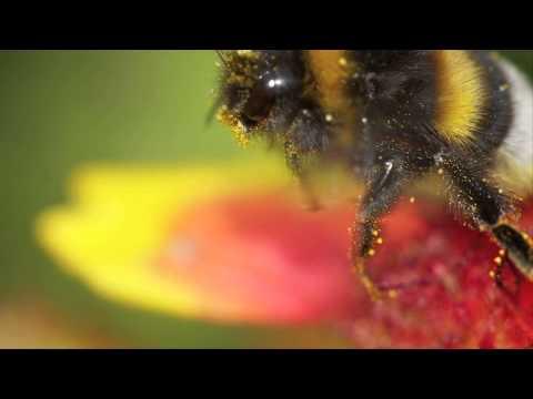 DJ Hazard - Digital Bumble Bees