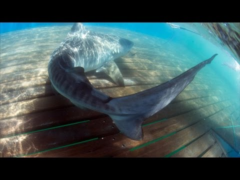 OCEARCH Australia - Expedition Summary