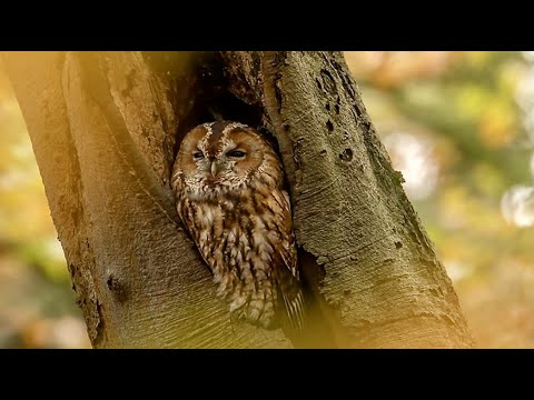 Download WinterWatch 2021(January) Last-Day 8 of 8