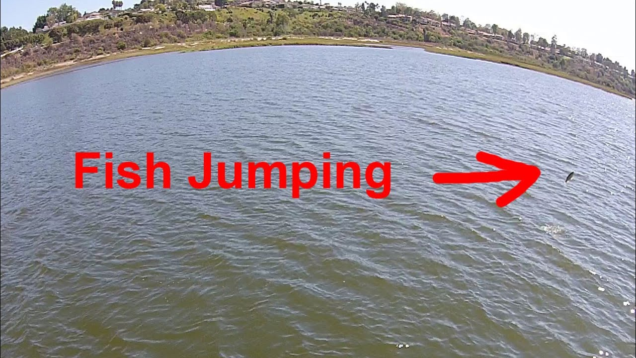 Drone Aerial View Fish Jumping Newport Beach Back Bay