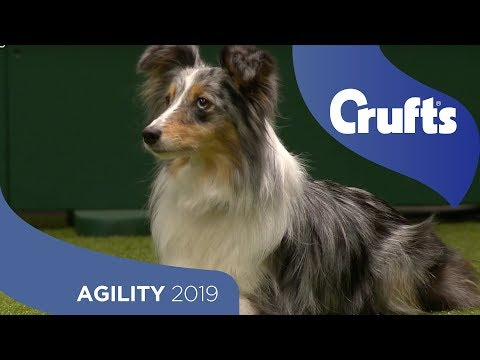 Agility Championship Round 1 – Jumping - Medium | Crufts 2019