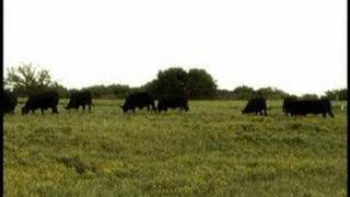 Scream Country Grazing Cows TV Spot