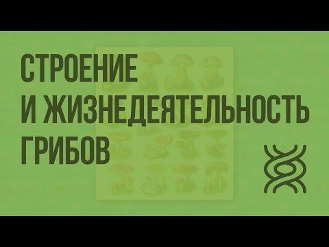 Видео. Самые интересные видео про грибы и грибников.
