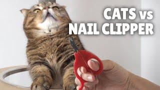 Cats vs Nail Clipper