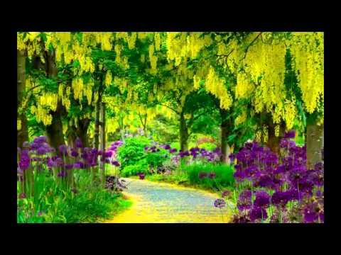 Тенистые аллеи.  Музыка Сергея Чекалина. Shady Alleys. Music By Sergey Chekalin
