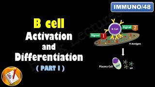 B cell Activation and Differentiation (PART 1): T Independent Activation (FL-Immuno/48)