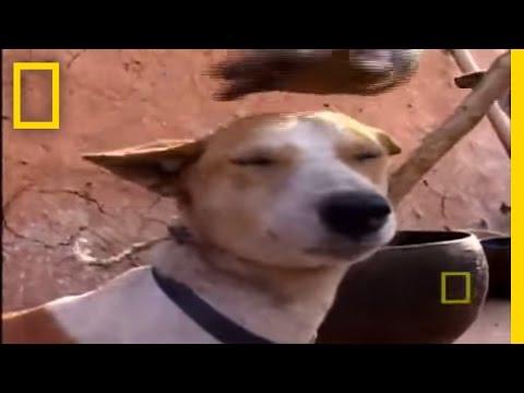 Eating Dog | National Geographic