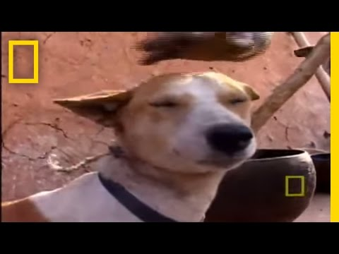 Eating Dog | National Geographic