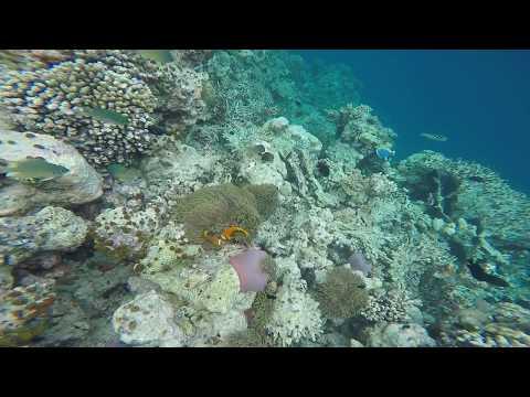 We found nemo in Maldives