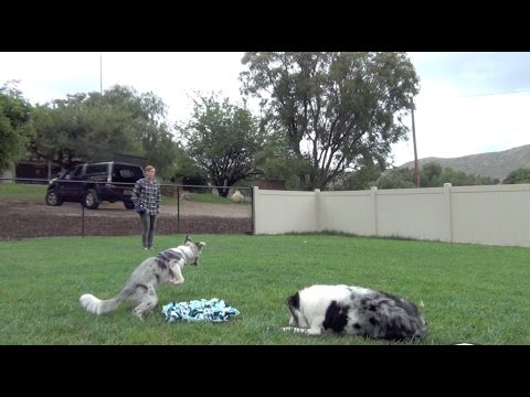 Come when called using a snuffle mat - free video excerpt from my Weekly Puppy Insights