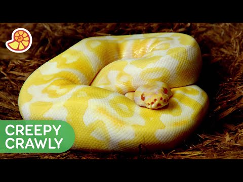 Why Do Snakes Have No Legs? 🐍🦵   Mysteries of Evolution