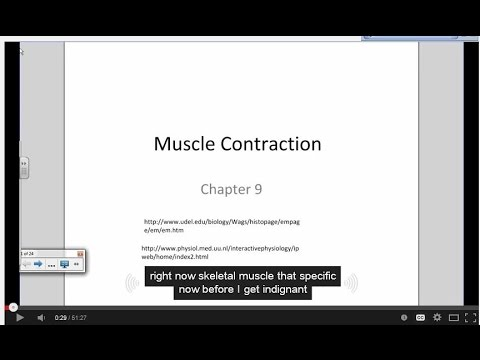 Physiology of a Muscle Contraction