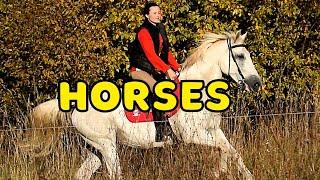Красота в каждом движении. Девушка и лошадь. Girls and horses