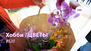 видео: 160#120 / Хобби Цветы / 03.2019 - АШАН (ХИМКИ). ОБЗОР