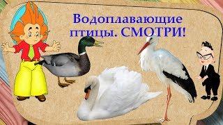 ВОДОПЛАВАЮЩИЕ ПТИЦЫ водоемов ☛ СМОТРИ И СЛУШАЙ познавательное видео про птиц!