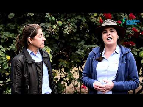Angela e Roberta da Melhora +, falando do 4º LEILÃO GENÉTICA ADITIVA EXPOGENÉTICA 2021