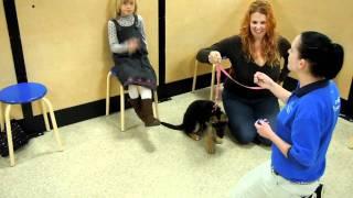 Dazy in dog training class