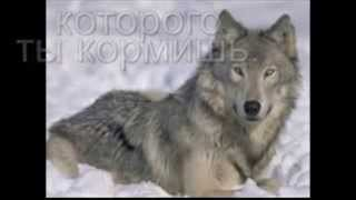 Два волка. Мудрая притча