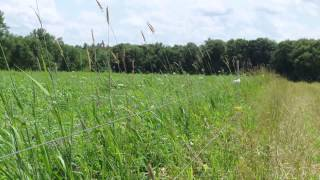 Pasture Soil Health Project, Russ Wilson - Year 1