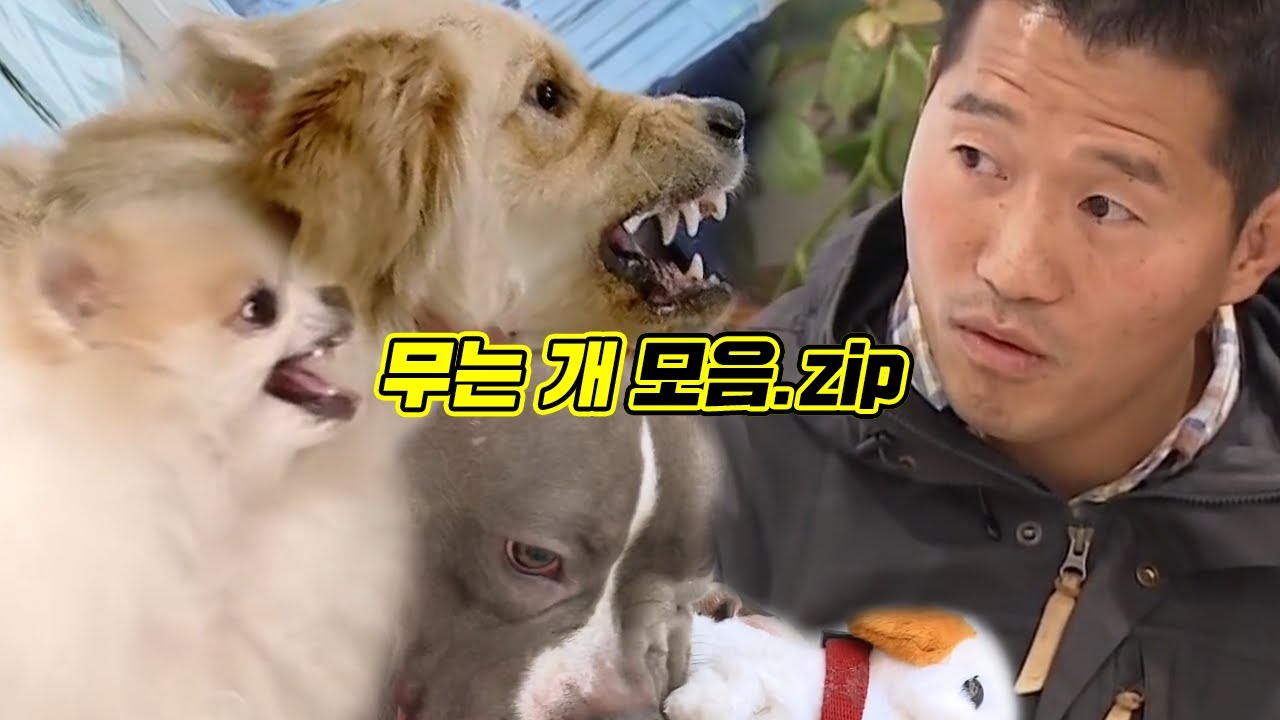 [다시보기] 개훌륭 강형욱도 물렸다! 개는 훌륭하다 무는 고민견들 영상 모음.zip