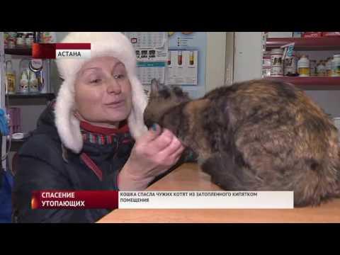 Кошка, спасшая чужих