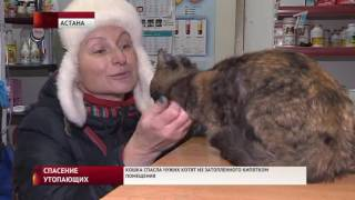 Кошка, спасшая чужих котят из затопленного кипятком подвала, ищет хозяина