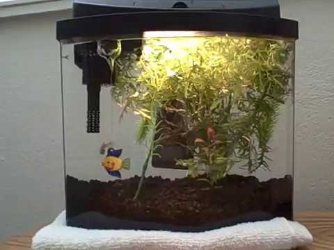 2 5 gallon fish tank guppy nursery youtube for Fish for 2 5 gallon tank