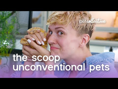 Unconventional Pets | The Scoop