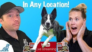 How To Teach Your Dog To Listen To You - Professional Dog Training Tips