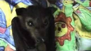 Cute baby Fruit Bat