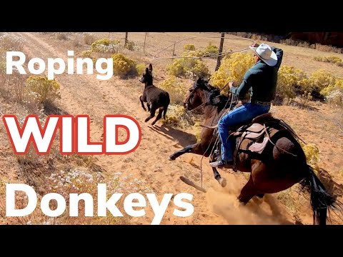 Roping Wild Burros On Indian Reservation: Vlog #10