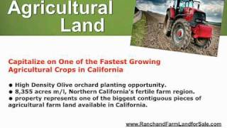 Olive Orchard for sale - Olive land for sale - Land Northern Ca