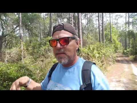 #glassgeekdailyvlog Segway mini pro  through a Florida swamp