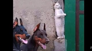 dog and cat funny compltion/animals comedy videos/funny videos