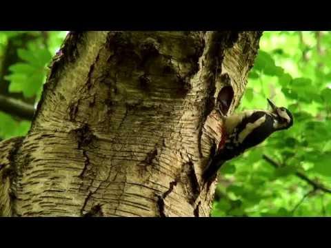 Parkwood springs Wildlife Cooks Wood Rd Sheffield