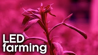 How to Farm Crops Indoors | Earth Lab