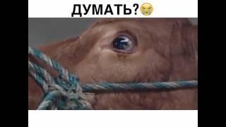 Могут ли животные думать
