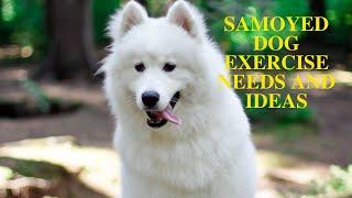 Samoyed Dog Exercise [Needs and Ideas]
