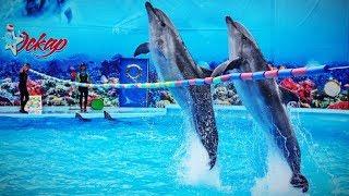 """Дельфинарий """"Оскар"""" в Геническе. Полное выступление дельфинов"""