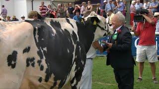 Pencampwriaeth Holstein | Holstein Championship