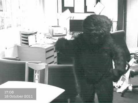 Gorilla-CCTV