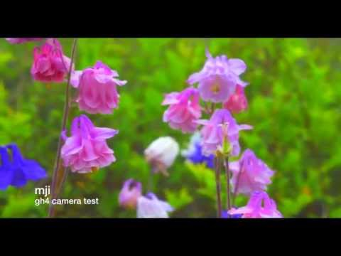 gh4 camera test