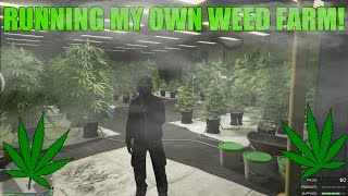 Running my own Weed Farm in GTA 5! (Part 2 of Biker DLC)