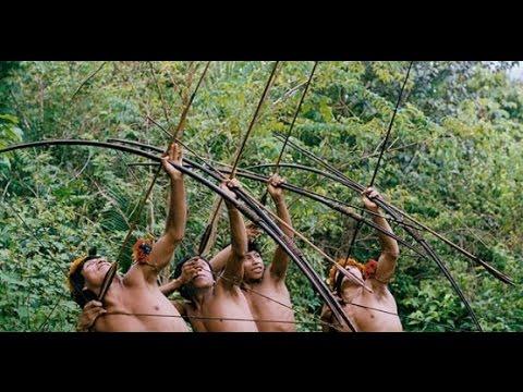 Gazelle Indigenous In The Amazon Jungle , Monkeys And Boar Hunt
