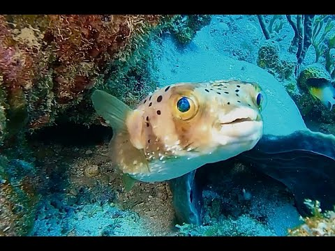 COME DIVE WITH ME IN BARBADOS from SANDALS ROYAL RESORT AUG 2021 60 MIN UNDERWATER RELAXATION VIDEO