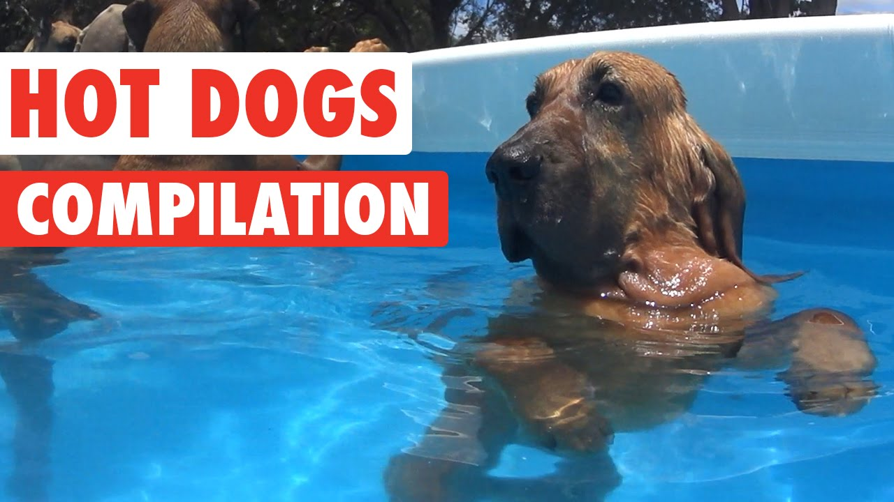 Humorous Scorching Canine Video Compilation 2016
