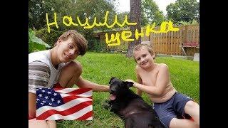 Нашли породистого щенка. 🐶Бездомные кошки и собаки в США. Личный опыт.